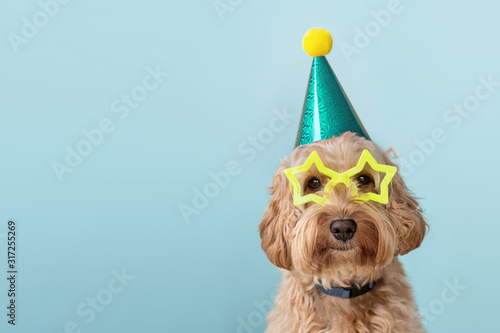 Cute dog wearing party hat and glasses Canvas Print