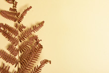 Autumn Fern Leaves Isolated On...