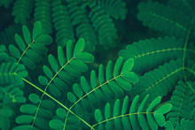 Fresh Tropical Green Leaves Background. Botanical Hawaii Nature. Natural Lush Greenery Texture. Exotic Green Tropic Forest. Abstract Summer Backdrop.