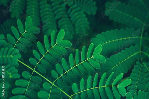 Wallpaper Mural Fresh tropical green leaves background