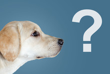 Surprised Dog, Question Mark, ...
