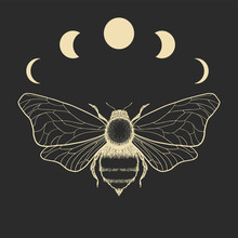 Vector Illustration Of Fly And...