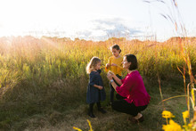 Mother Picking Wildflowers With Her Children