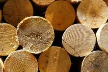 Torn Round Wooden Materials Cl...