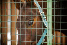 Horse Behind Bars: Brown Horse...
