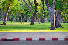 Close-op Footpath On Top With Trees On Public Park To Help Create Shade And Help Reduce Air Pollution