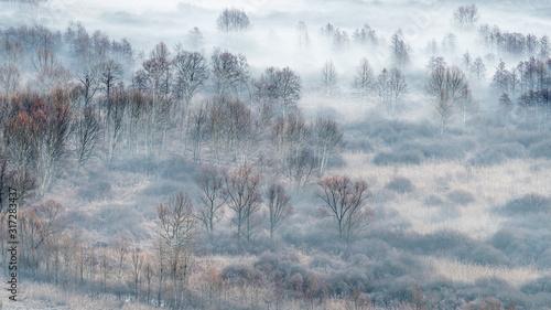Winter landscape, the misty forest at sunrise