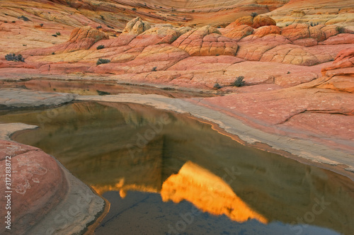Landscape of rock formations and rain pool, Coyote Buttes Paria Canyon Vermillion Cliffs Wilderness Area, Arizona, USA