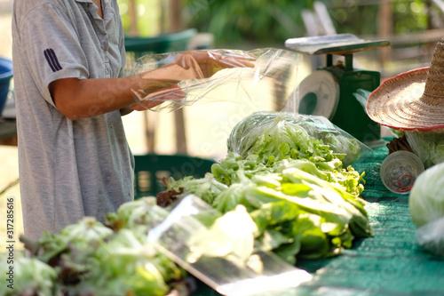 packing organic fresh vegetables Canvas Print
