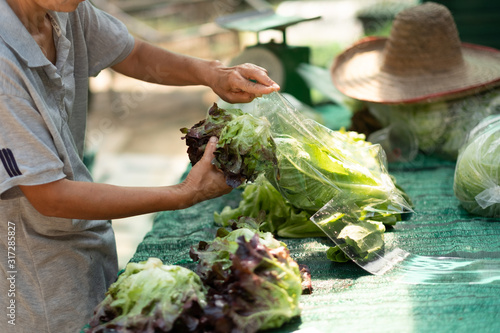 Photo packing organic fresh vegetables