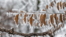 Brown Frozen Leaves Winter Tim...
