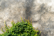 Bare Cement Walls With Ivy Vines