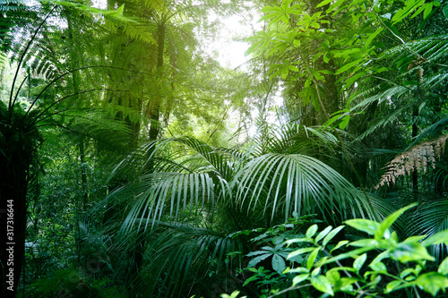Obraz Canopy of jungle - fototapety do salonu