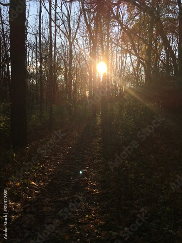 Vertical shot of the sun shining through the beautiful trees in a forest