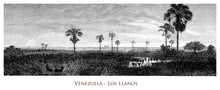 Venezuela - Los Llanos Tropical Grassland Plain Area. Ecoregion Flooded By The Orinoco River During The Rainy Season Transforming The Area In Wetland And Savanna