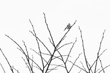 Cute Bird Sitting On A Bare Tree Under The Clear Sky