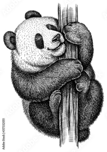 Fotografija black and white engrave isolated panda illustration