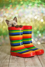 Greeting Card. Cute Kitten Is Sitting In Rubber Boots. Funny Cat.