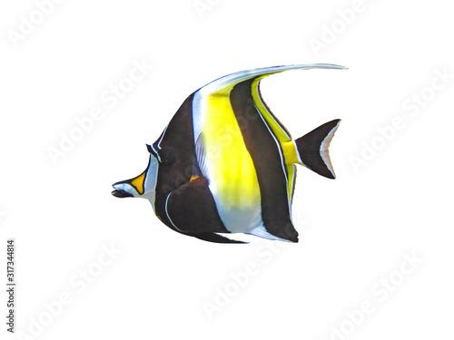 Zanclus cornutus fish on a white background Fototapet