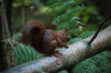 Scotland Wildlife Photography ...