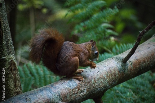 Photo Scotland wildlife photography isle of arran squirrel
