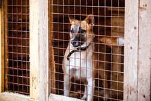 Unhappy Sad Dog In A Cage. Dog...