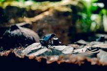 Dark Frog Sitting On A Gray St...
