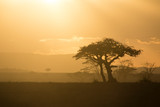 Fototapeta Sawanna - tramonto in africa