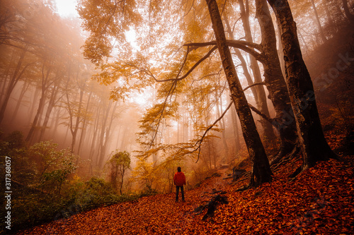 Back view of unrecognizable man walking and contemplating forest with autumn colors among fog - 317368057
