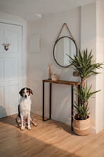 Loyal Cute Pet Waiting For Owner And Sitting On Floor Near Front Door In Designed Flat Hallway In Paris