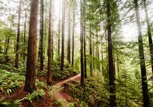 Hiking Trail In Portland Oregon