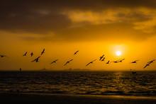 Seagull Silhouette Sunrise On ...
