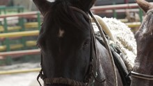 Close Up Of A Horse Look