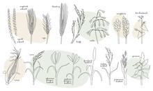 Continuous Line Grain Crops (w...