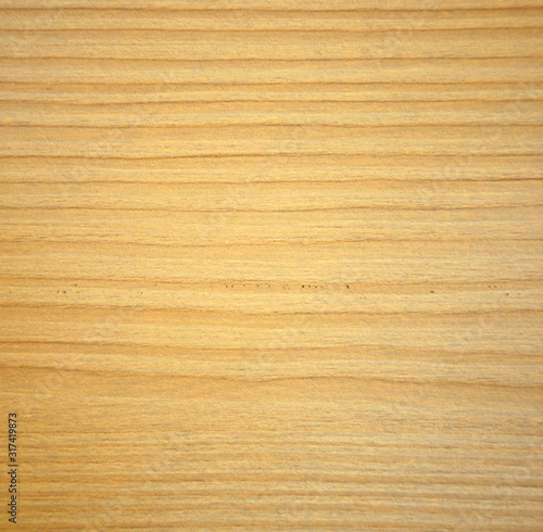 Photo Light alder texture of natural wood on a slice closeup.