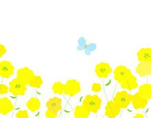 菜の花と蝶 背景イラ...