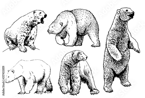Graphical set of polar bears isolated on white background,vector illustration Canvas Print