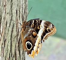 Closeup Of A Brown Butterfly O...
