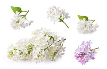 Set Of Blooming Lilac. Branche...