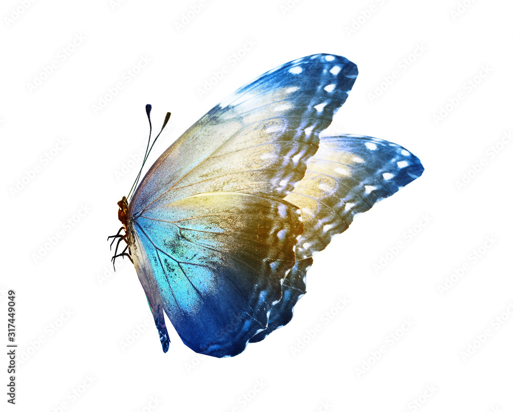 Fototapeta Color butterfly , isolated on white background