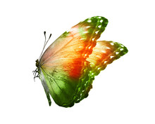 Color Butterfly , Isolated On ...