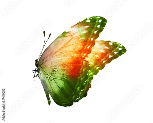 Obraz na plátne Color butterfly , isolated on white background