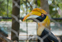 Hornbills In A Cage At The Zoo, Thailand