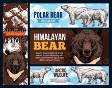 Polar Andhimalayan Bears, Wildlife And Hunting. Vector White And Brown Bear Animal Sketches. Full Length And Muzzle Of Asian Black Bear And Ursus Maritimus