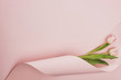 top view of tulips wrapped in paper swirl on pink background