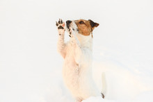 Dog Feeling Cold In Snow Beggi...