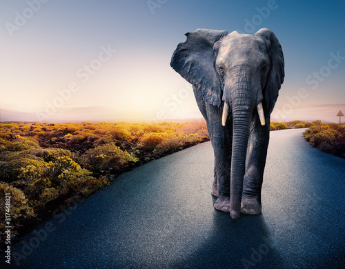 African elephant standing on tar road. Wallpaper Mural