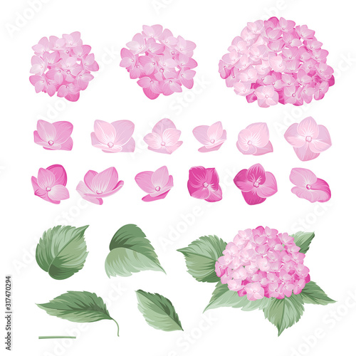 Hand drawn styleset of white hydrangea, Botanical illustration of hortensia flowers isolated on a white background Tableau sur Toile