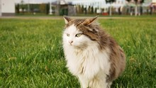A Lost Cat Sits On The Grass L...
