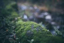 Beautiful Green Moss With Bokeh